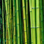 Bamboo Tree